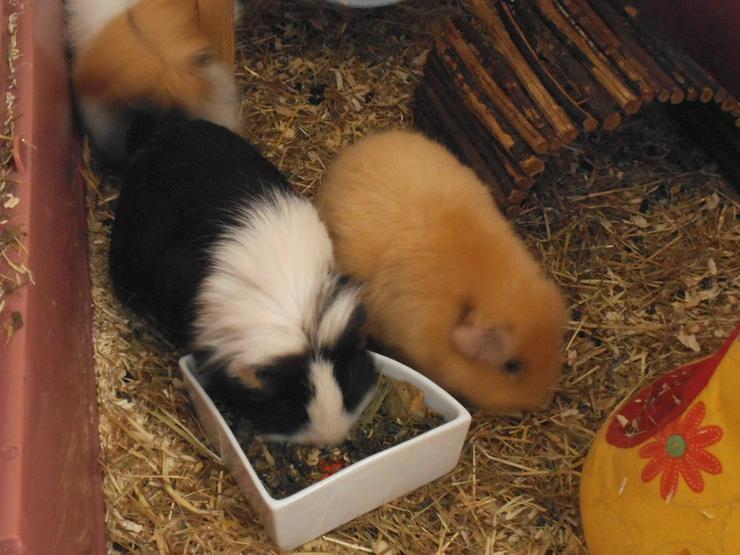liebevolle Tierbetreuung bei Ihnen zu Hause