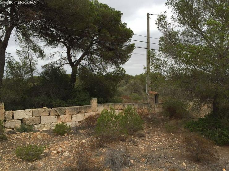 Bild 8: Grundstueck in 07639 - Vallgornera