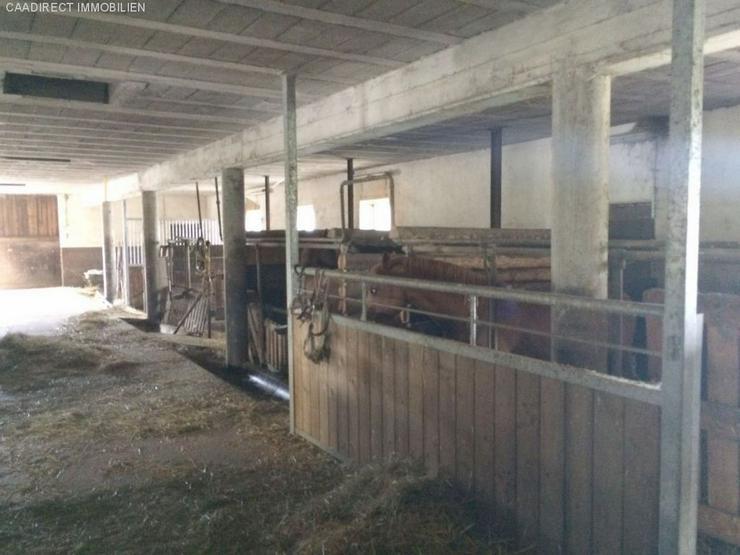 Bild 4: Grosszügiges Wohnhaus mit Umschwung u. Pferdestallungen im Elsass - 80 km v/Basel 20 km v...