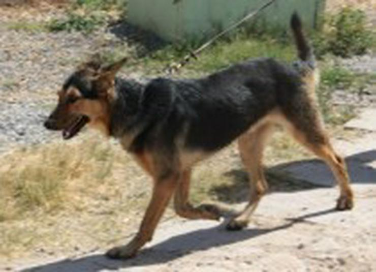 Bild 3: Rex, Tierschutzhund aus Spanien