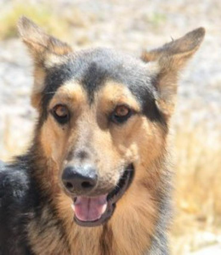 Bild 5: Rex, Tierschutzhund aus Spanien