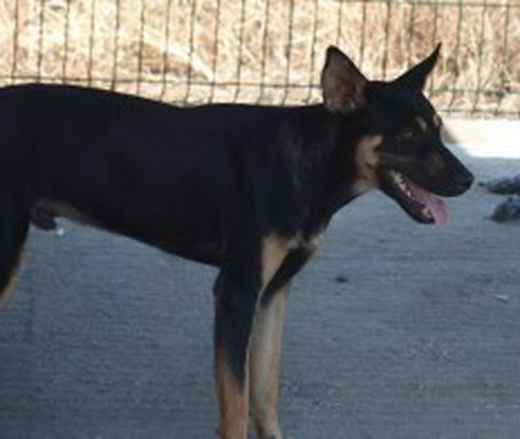 Bild 2: Martin, Tierschutzhund aus Spanien