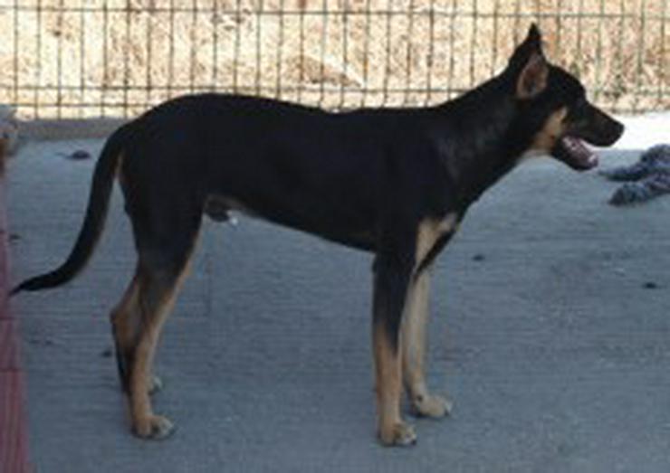 Bild 3: Martin, Tierschutzhund aus Spanien