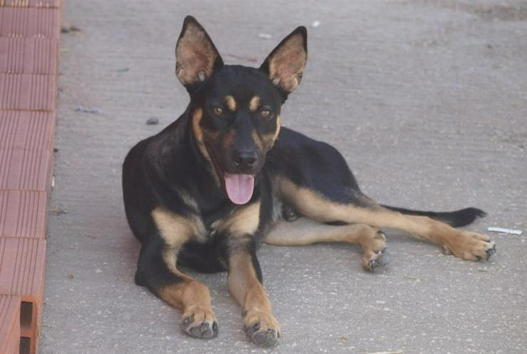 Bild 5: Martin, Tierschutzhund aus Spanien