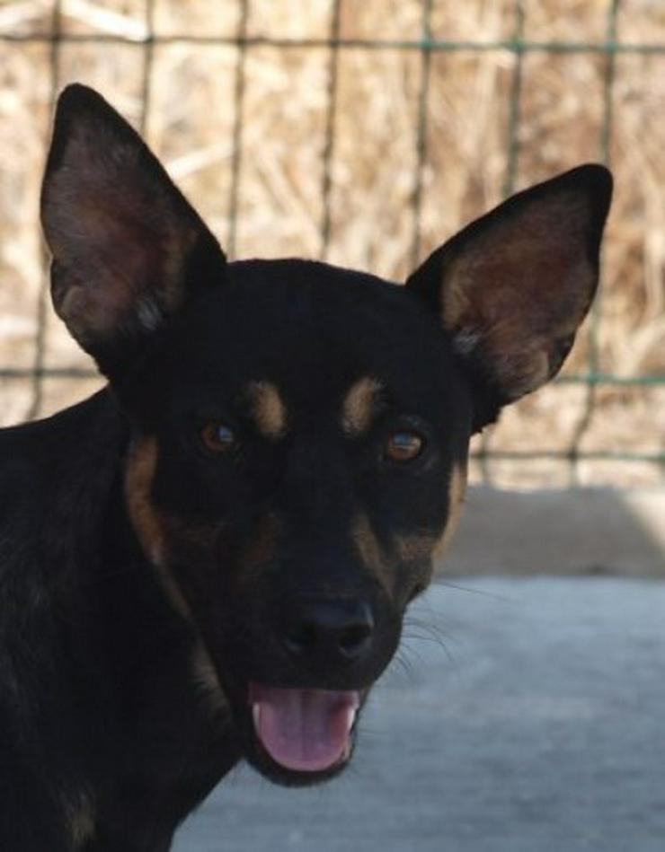 Martin, Tierschutzhund aus Spanien - Mischlingshunde - Bild 1