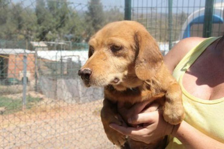 Bild 2: Fiona, Tierschutzhund aus Spanien