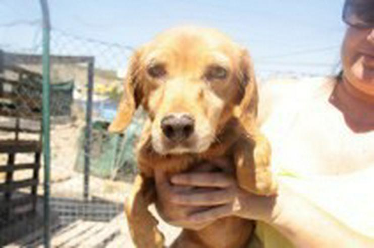 Bild 3: Fiona, Tierschutzhund aus Spanien
