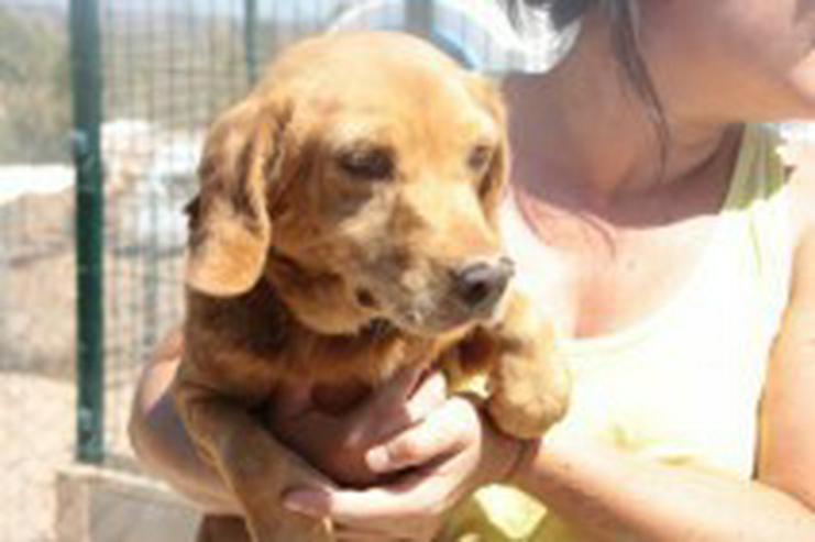 Fiona, Tierschutzhund aus Spanien - Mischlingshunde - Bild 1