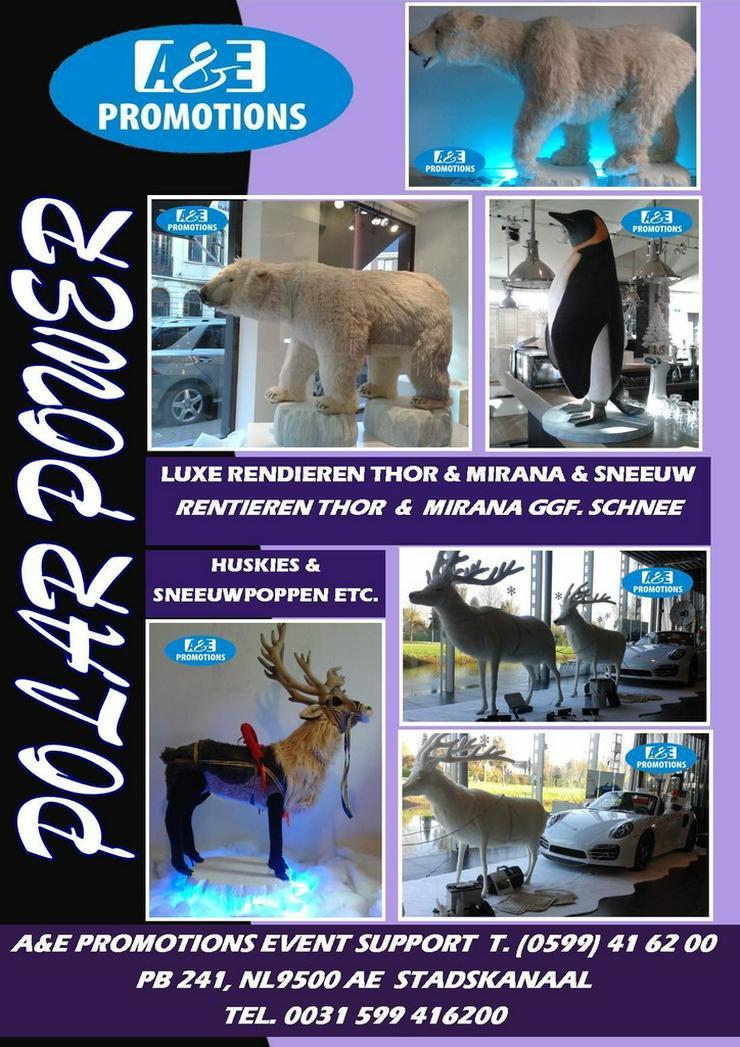 mieten nordpol requisiten huskies mieten usw. - Party, Events & Messen - Bild 1