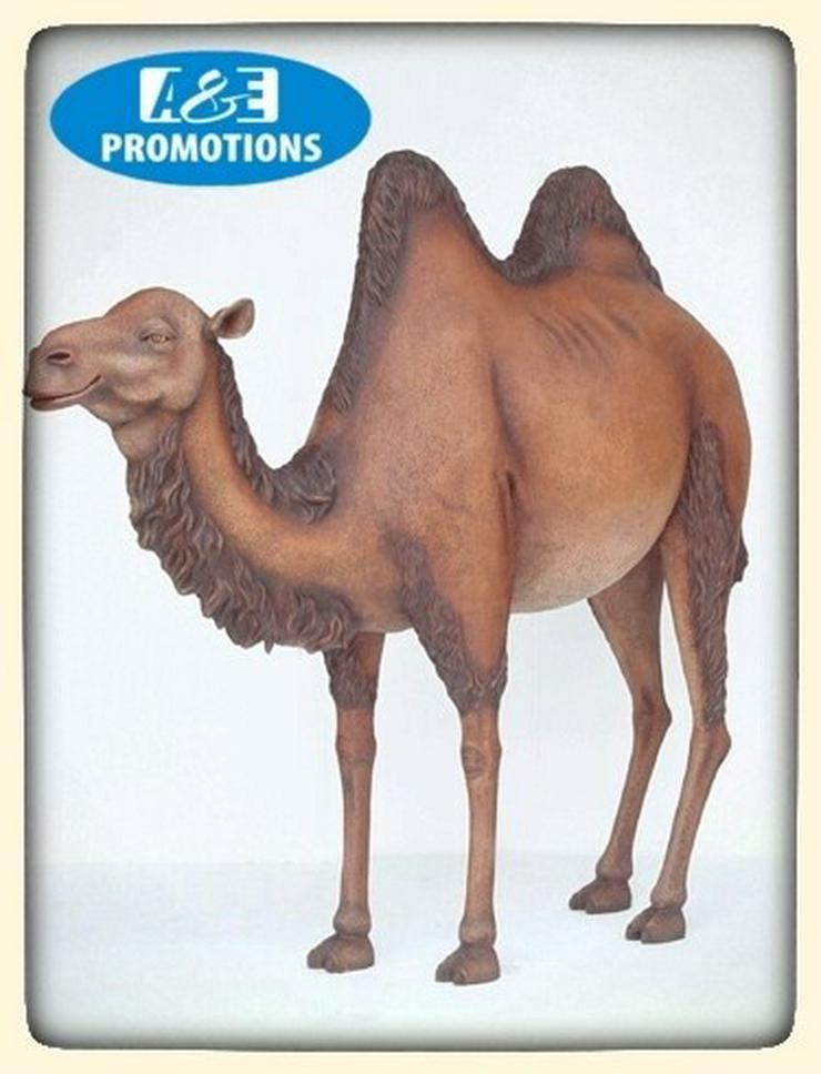 oase requisiten kamel verleih palmbäume usw.