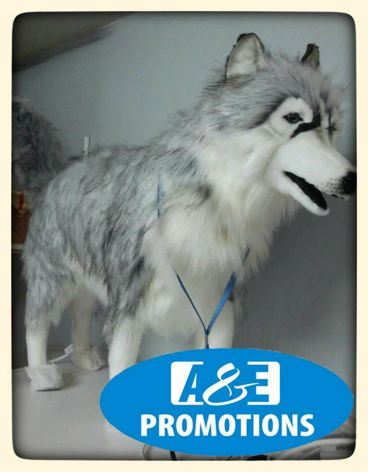 Bild 2: nordpol requisiten verleih huskies schlitten