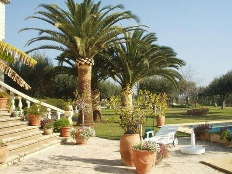 Bild 4: Traumhaftes Fincaanwesen mit Gästehaus u. parkähnlicher Gartenanlage nahe Denia