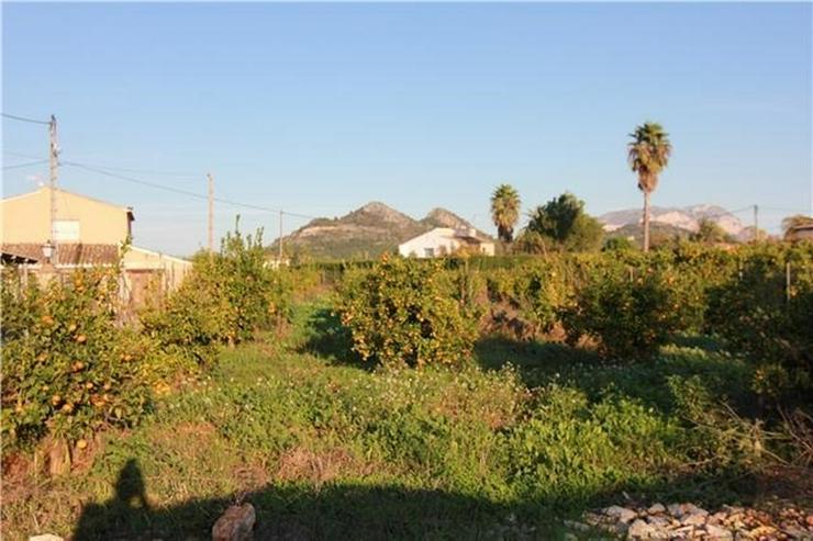 Bild 6: Renovierungsbedürftige Finca in den Orangenplantagen von Pedreguer