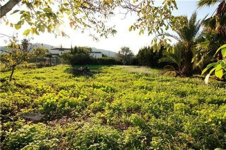 Bild 2: Renovierungsbedürftige Finca in den Orangenplantagen von Pedreguer