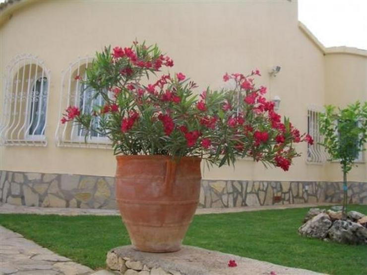 Bild 5: Geschmackvolle Villa mit fantastischem Meerblick in Oliva - San Pere