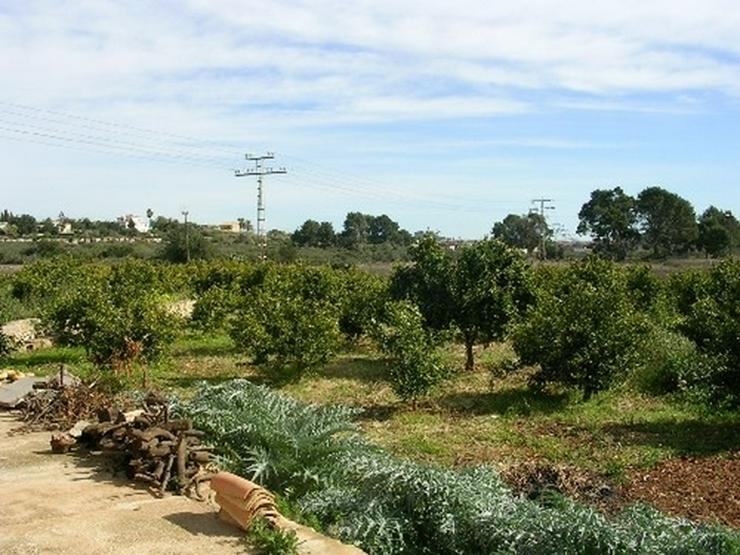 Bild 6: Grundstück in Denia