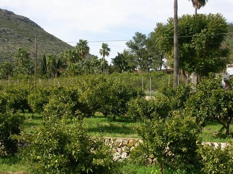 Bild 5: Grundstück in Beniarbeig