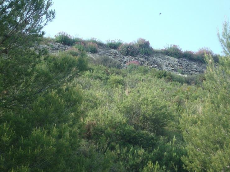Bild 2: Grundstück in Pedreguer