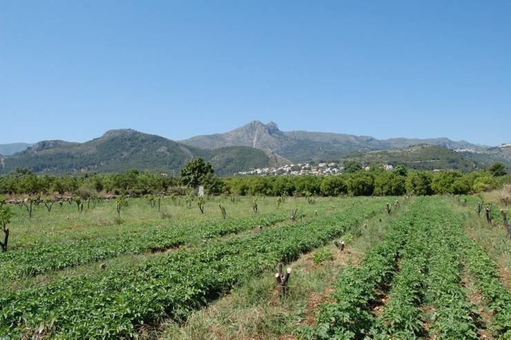 Bild 4: Grundstück in Orba