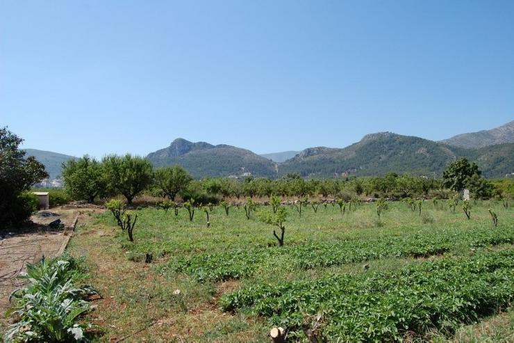 Bild 5: Grundstück in Orba