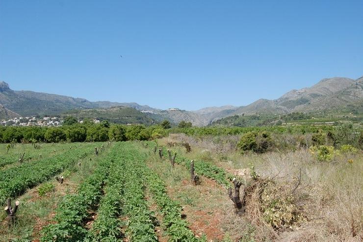 Bild 3: Grundstück in Orba