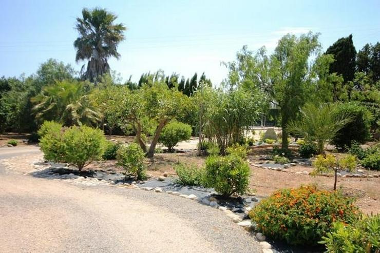 Bild 4: Villa mit 2 SZ und 3000 qm Grundstück mit 4-5 Campingstellplätze in Els Poblets