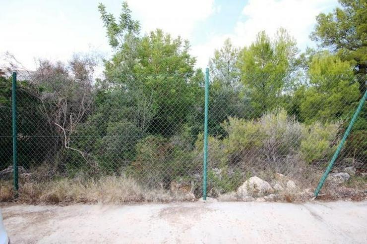 Bild 3: Sehr gut bebaubares flaches Grundstück mit Aussicht auf das Meer und die Berge am Monte P...