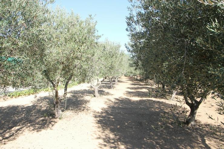 Bild 5: Schöne private Finca in Denia in der Nähe vom Golfplatz La Xara