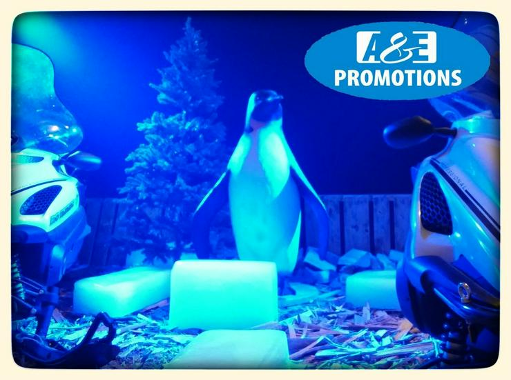 Bild 2: iglu verleih penguine mieten hamburg bremen