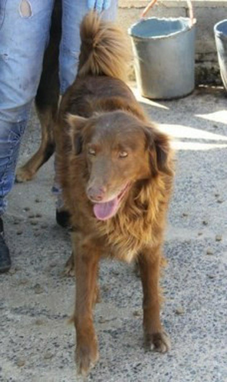 Mel, Tierschutzhund aus Spanien - Mischlingshunde - Bild 1