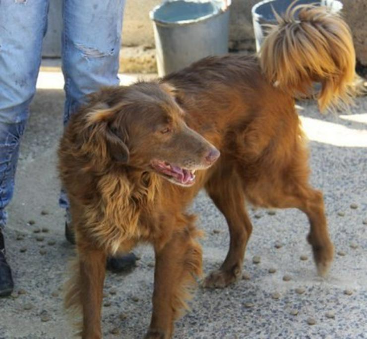 Bild 2: Mel, Tierschutzhund aus Spanien