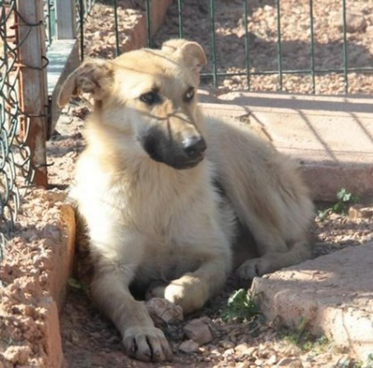 Bild 2: Yasmin, Tierschutzhund aus Spanien