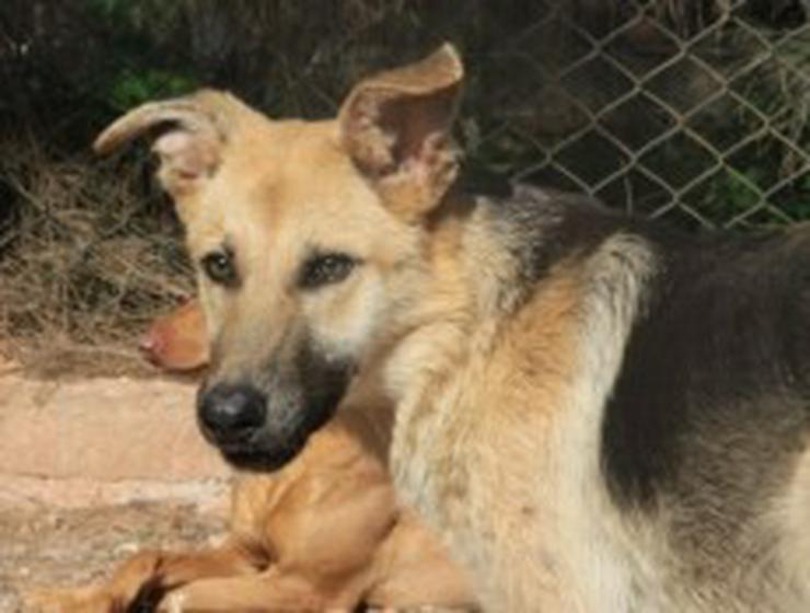 Bild 5: Yasmin, Tierschutzhund aus Spanien