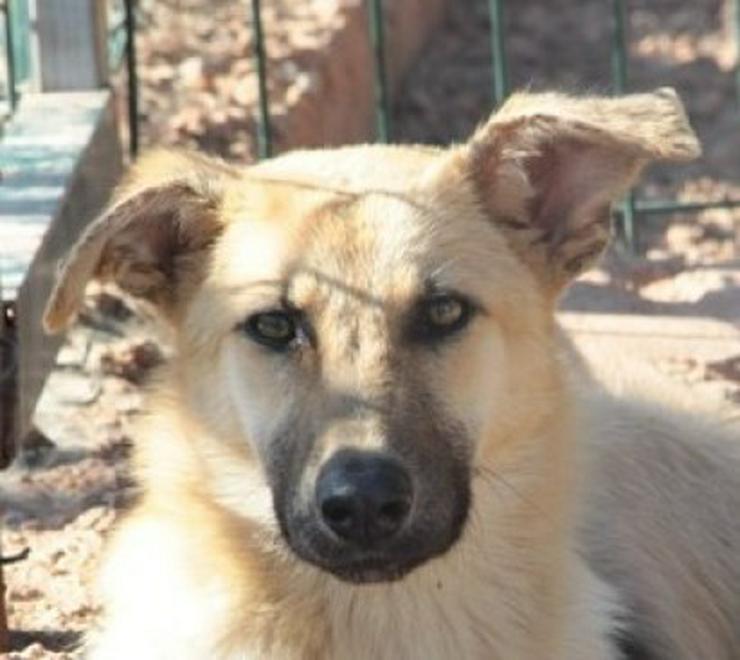 Yasmin, Tierschutzhund aus Spanien - Mischlingshunde - Bild 1