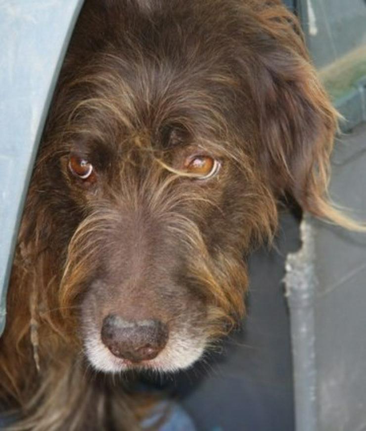 Bild 2: Lunia, Tierschutzhund aus Spanien