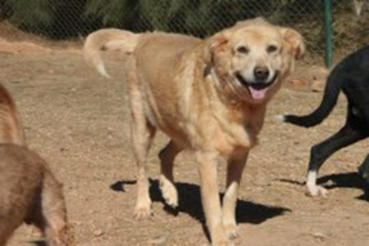 Bild 2: Anna, Tierschutzhund aus Spanien