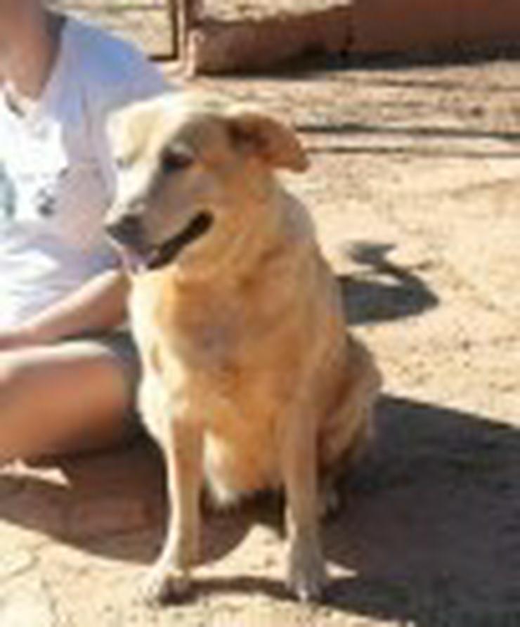 Bild 3: Anna, Tierschutzhund aus Spanien
