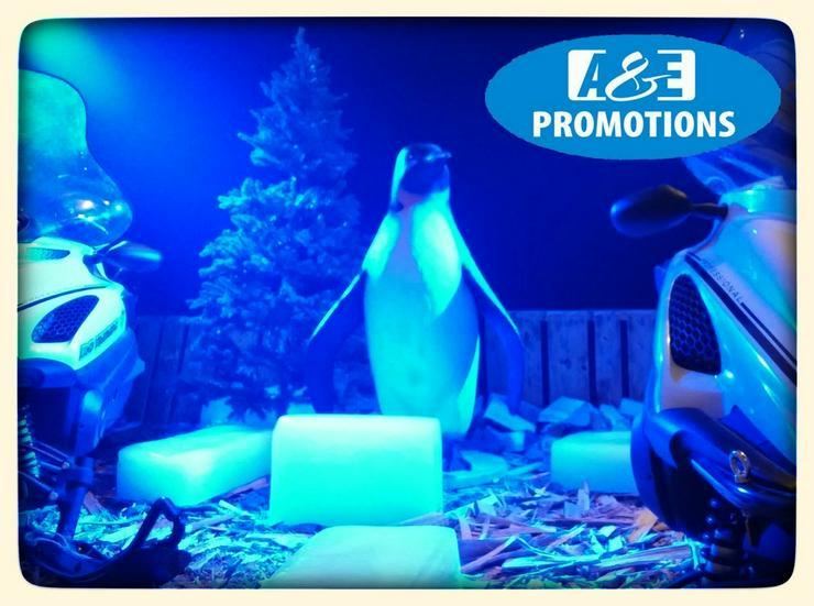 Bild 5: eisdeko mieten iglu pinguins mieten hamburg