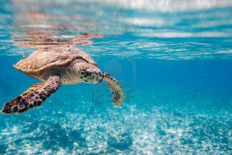 Bild 5: Segeln im Traumrevier Seychellen auf Katamaran