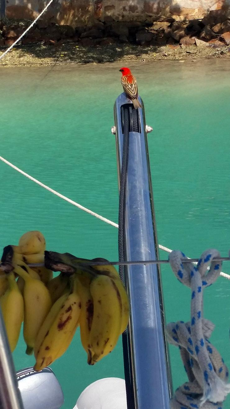 Bild 18: Segeln im Traumrevier Seychellen auf Katamaran