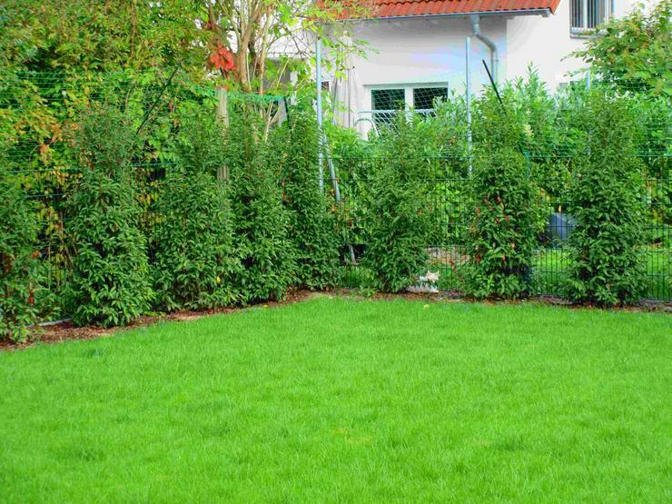 Garten-/Landschaftsbau