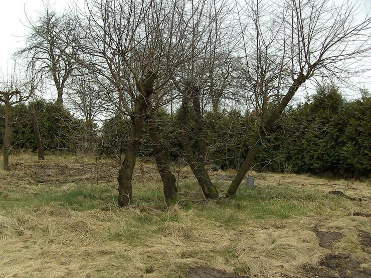 Bild 2: Baugrundstück in ländlicher Lage ...