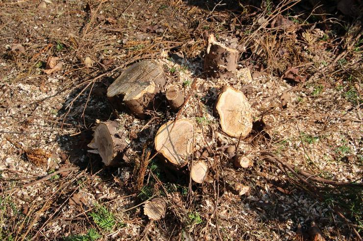 Bild 5: Baumstumpffräsen Wurzelfräsen Gartenpflege