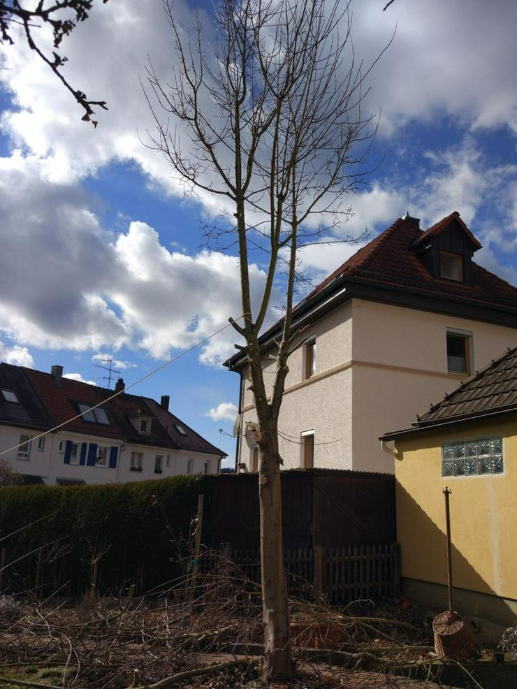Bild 6: Baumstumpffräsen Wurzelfräsen Gartenpflege