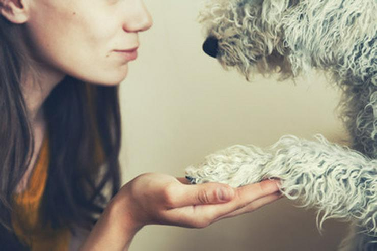 Basiskurs für Tierschutzhunde