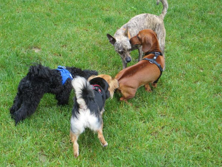Zwergerlkurs für Kleinhunde