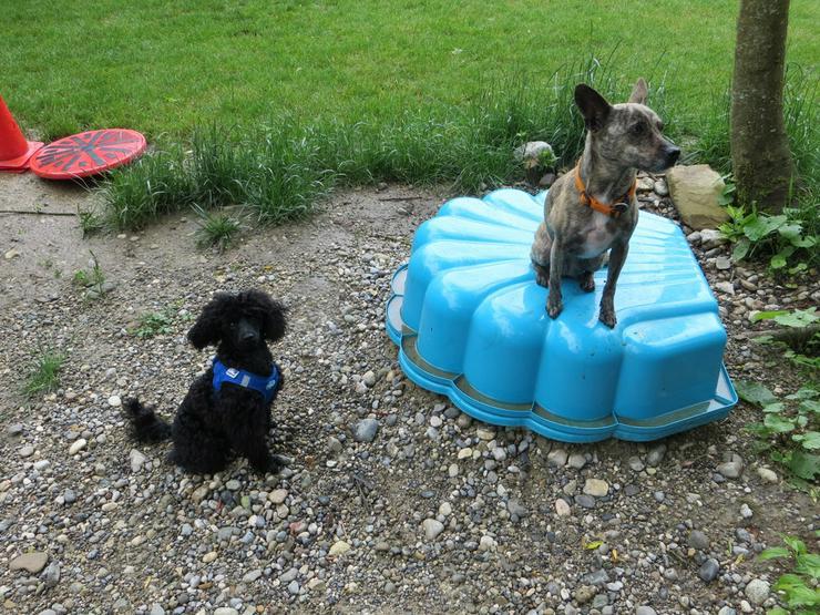 Bild 2: Zwergerlkurs für Kleinhunde