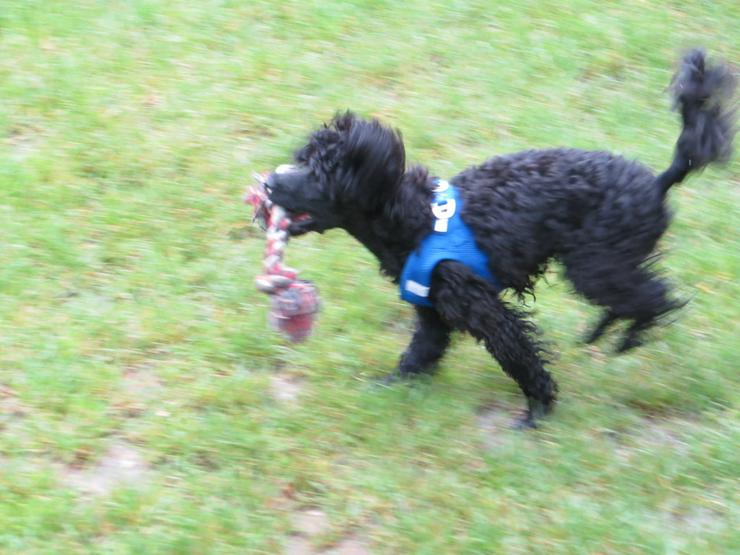 Bild 3: Zwergerlkurs für Kleinhunde