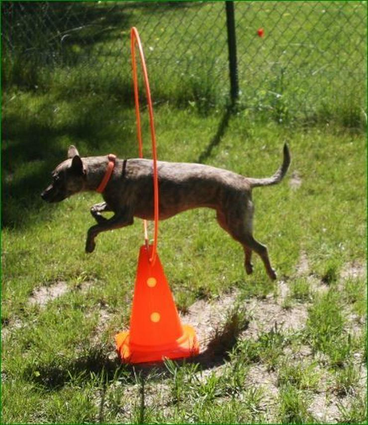 Bild 4: Zwergerlkurs für Kleinhunde