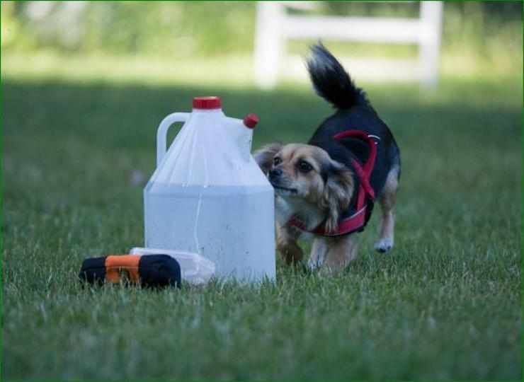 Bild 5: Zwergerlkurs für Kleinhunde
